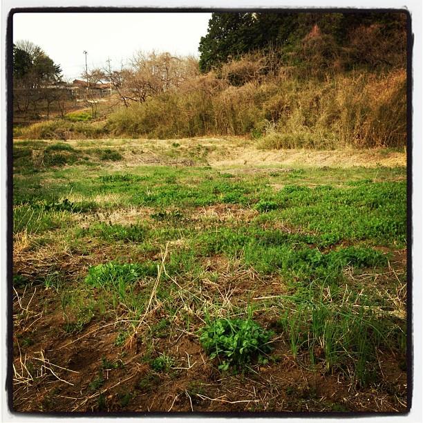 field今年はここで野菜やハーブを育てます。