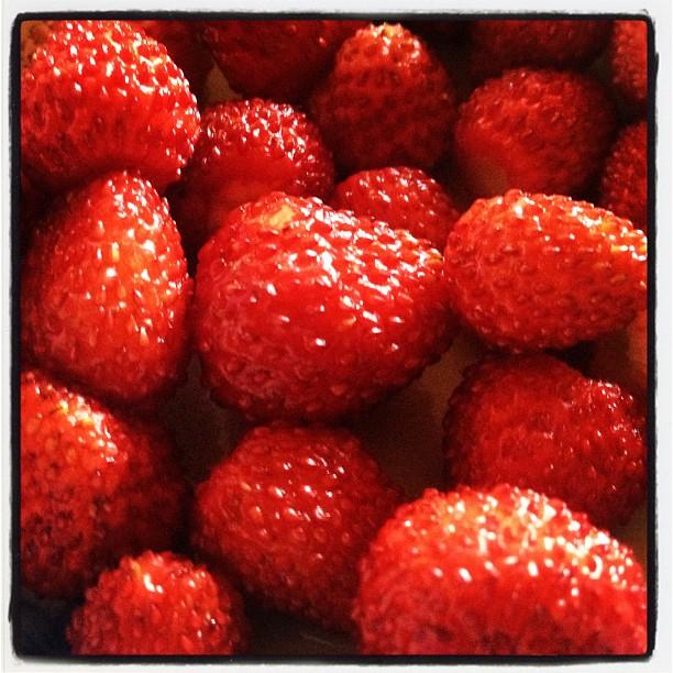 strawberryプランターや庭の片隅で育ったワイルドストロベリーが 少しづつ食べごろに(^^) チョットづつしか取れないので ヨーグルトなんかに入れて食べるには丁度いい!