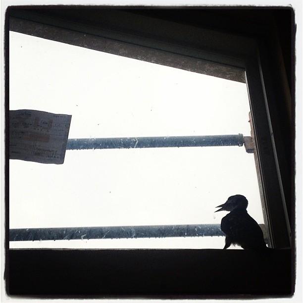 angel visit 小屋の中にお客さんが^^; 啄木鳥の子どもかなにからしいが  なかなか出れない…直ぐ下は思いきり開いているのに…
