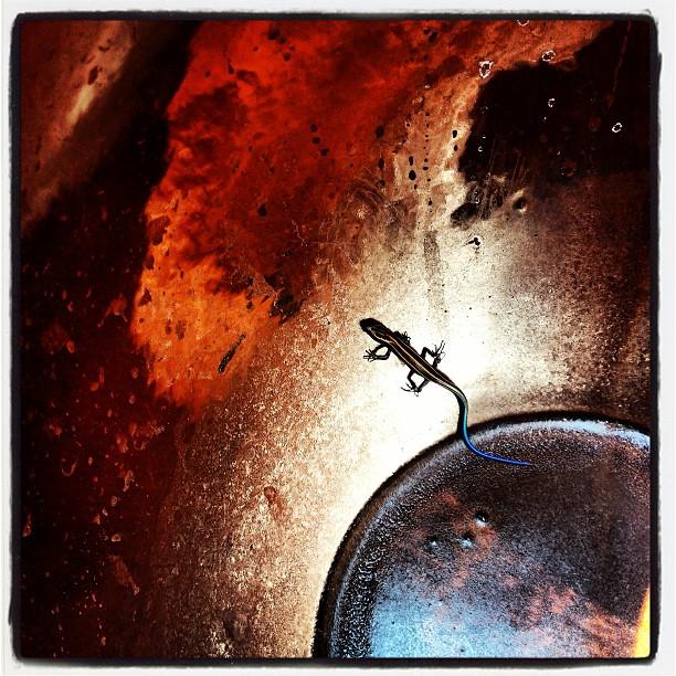 lacertid 梅の壺を洗って干したらいつの間にか 違うものが侵入していた(^^;;