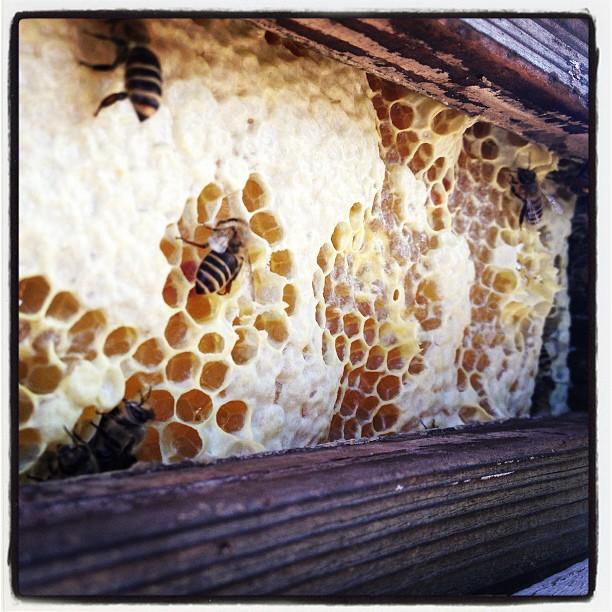 bee 日本蜜蜂の巣箱が ギッシリ詰まっている(^^)