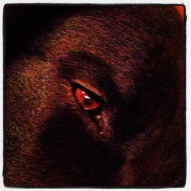 fall 陥落…寝落ち寸前のabbey(^^; ここまで来ると 鼻に指突っ込んでも 歯茎びろーんしてもされるがまま(^^) …あやすみ!