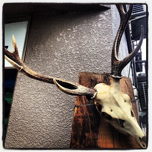 deer horn 下北沢の街にも鹿のツノは意外と良く合う(^ ^) 12月23日(月•祝) shimokitazawa*baseで行いました 山野川商店 設立パーティを行わせていただきました。60名以上の方々に参加していただき 無事、盛大に第一歩を踏み出すことが出来ました。参加していただきました皆様、メッセージを頂戴した方々 本当にありがとうございました。まだまだ始まったばかりの 山野川商店ですが 楽しいこと 美味しいモノ 嬉しい出会いと発見を提供できればと思っています(^ ^)