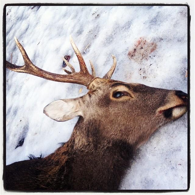 Japanese deer 鹿の解体とその準備のために 東京〜山梨 弾丸往復(^ ^)鹿汁、焼肉、ご飯の準備して ただいま帰路に。午後から仕込みがあるので今回は 行かない予定でしたが チョットだけでも 時間を共有したかったので(^ ^)