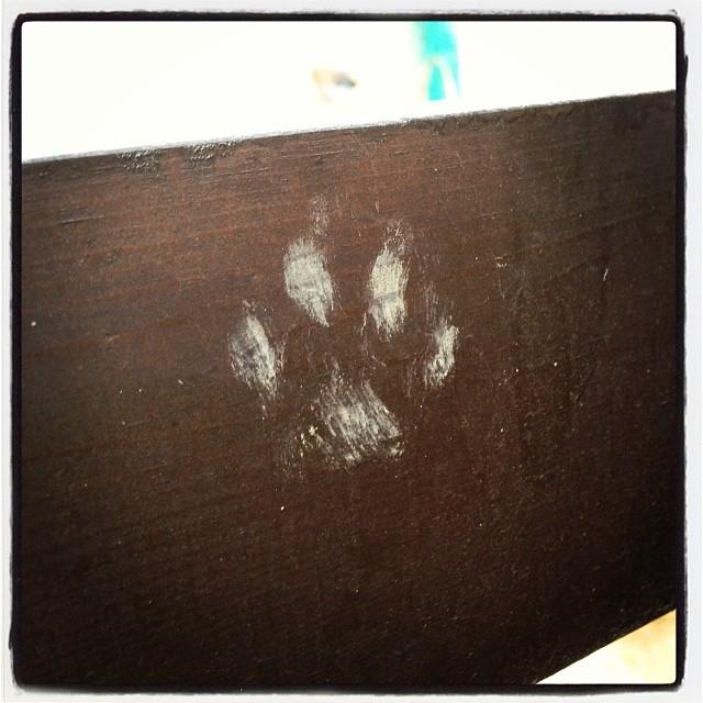 There are the footprints. 何だろうなにかの足跡が 薪棚にキレイに残っていた^ ^