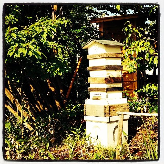 bee hive nagasaka*baseの突端に設置した 分蜂して増えた 日本蜜蜂の巣箱^^その後ろは 燻製機。
