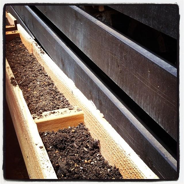 planter 薪棚のラダー部分に 自生していたアサガオを移植して絡ませようと 急遽 プランターを拵える^^所要時間は 5分!