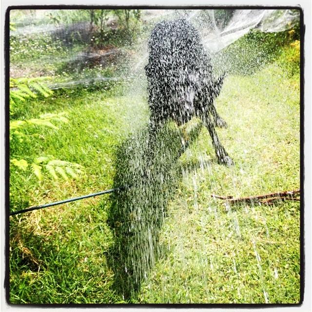 get soaking wet 暑いので水遊び^^ 濡れる→カラダブルブル→濡れる→カラダブルブル→濡れる→カラダブルブル→濡れる→カラダブルブル→•••いまこの辺^^; 終わらない夏の日です^^