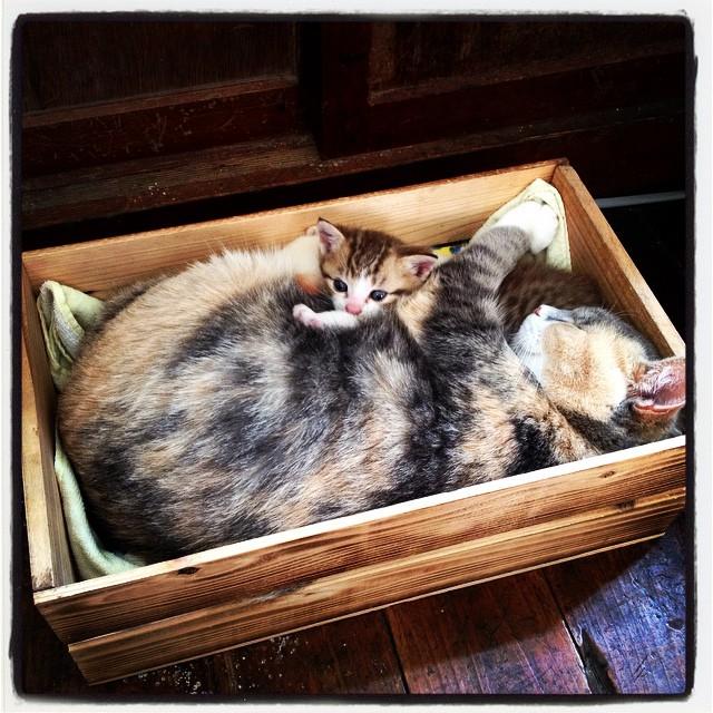 boxed cat フィトンチットの居候猫が 箱詰になっていた^^
