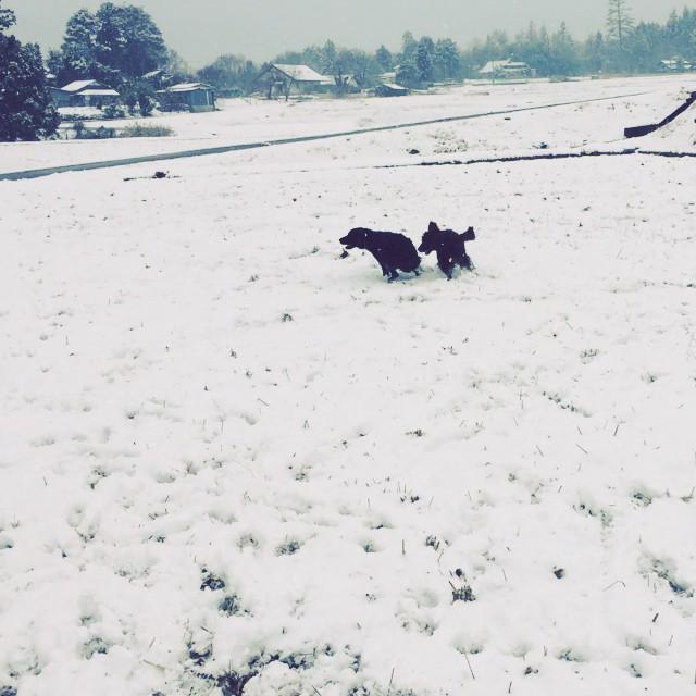 play tag 雪が降った日は abbeyときなこの追っかけこが定番^^ ボール一個でここまで遊べるのがすごい^^;