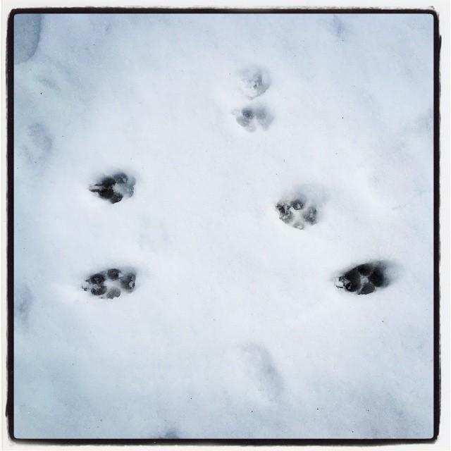 tracks きのうの降った雪に足跡が^^と おもったらabbeyだった^^;