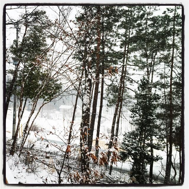 according to schedule 予定通り夜半過ぎから雪が降りはじめ 朝には真っ白でした^^; 白くて寒い朝です^^