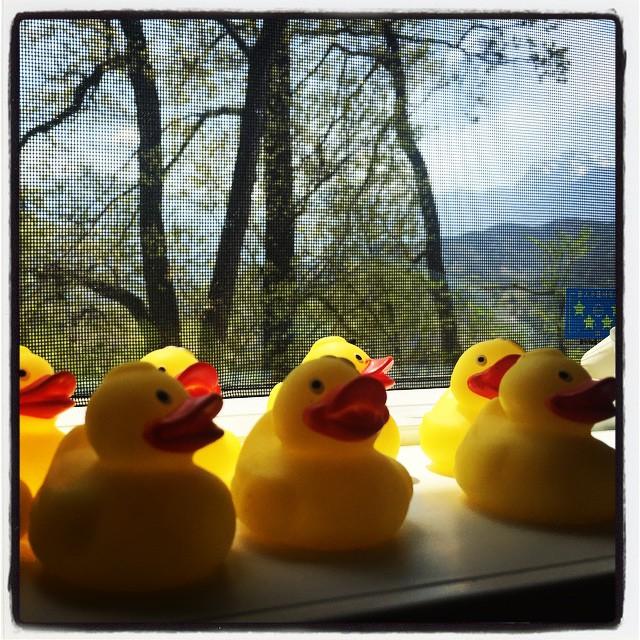 duck 一日の疲れを癒してくれます^^ #nagasakabase #そんなあなたはスパイシー