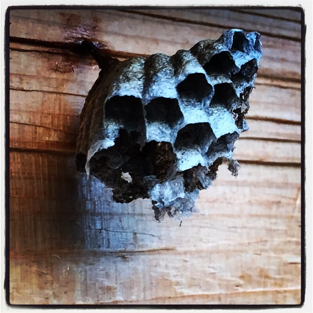 cellula この時期 いろんなところに蜂の巣^^; #nagasakabase #mountainmountain #そんなあなたはスパイシー