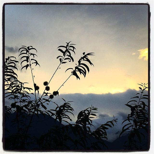 marron 庭先の山栗が実をつけて 少しづつ大きくなってきた^^ #nagasakabase #mountainmountain #そんなあなたはスパイシー