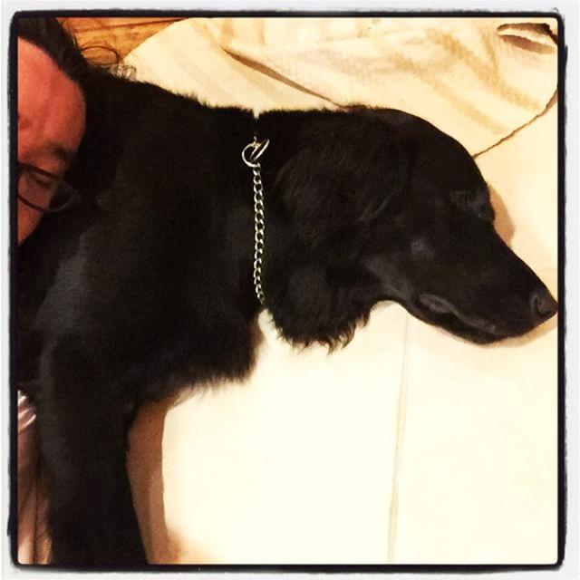 zzzz お互いちょっとあつくるしい^^;それでもたまの枕は 意外といい寝心地^^ #nagasakabase #mountainmountain #そんなあなたはスパイシー #BEEK05