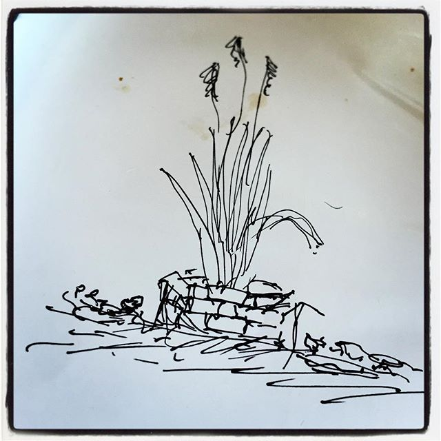 ebauche 母屋とmountain*mountainの間のスペースを整備中^^ 土留め代わりに蒔いたクローバーは順調に芽を出し いい加減な蒔き方がまだらとなって現れてます^^; 真ん中に生えている ススキを暴走しないように煉瓦で花壇を作ってみるかと 手元にあった大切な封筒の裏にイメージを起こしてみた^^; まずは雑草とのたたかいからか^^; #nagasakabase #mountainmountain #そんなあなたはスパイシー