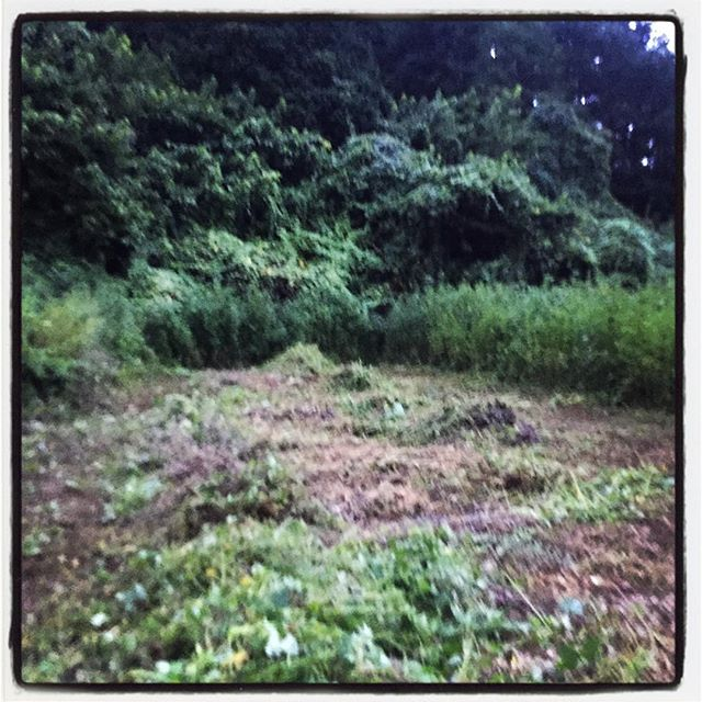 cultivation とりあえず半分^^;無理はせず 植えつける分だけ開墾^^ また続きを!刈った草を寄せて 耕して^^ #nagasakabase #mountainmountain #そんなあなたはスパイシー