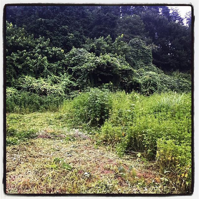 plow a field やっと半分やっつけた^^; 一枚の半分^^; あと2枚半は残っているということか^^; #nagasakabase #mountainmountain #そんなあなたはスパイシー