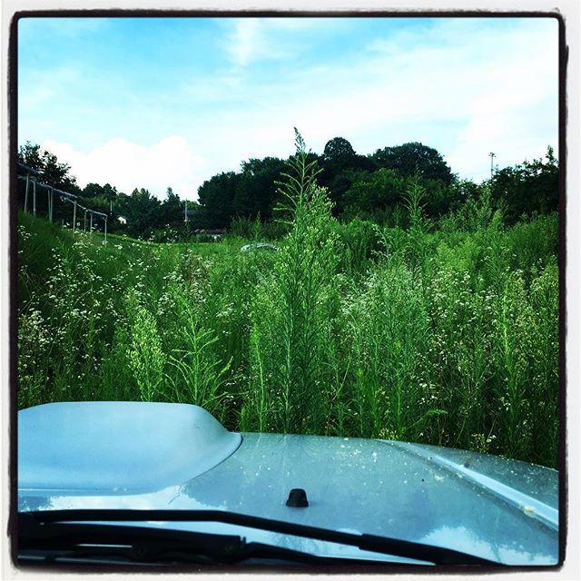 grass sea ことし新たにお借りした畑^^; 慌ただしさと 要領の悪さで 手つかずの状態に^^;ジムニーのボンネットを超える高さまで 雑草が立派に成長していました^^; しばらくは刈払い機で格闘の日々です^^; #nagasakabase #mountainmountain #そんなあなたはスパイシー