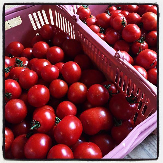 tomato さらに完熟アウトレットトマトを分けていただいたので カットカットカット^^; 明日もカット^^ ずっとおんなじことを書いてます^^; #nagasakabase #mountainmountain #そんなあなたはスパイシー