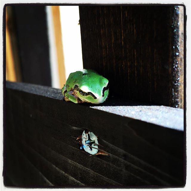 zzzz 陽だまりで カエルが昼ね^^ #nagasakabase #mountainmountain #そんなあなたはスパイシー