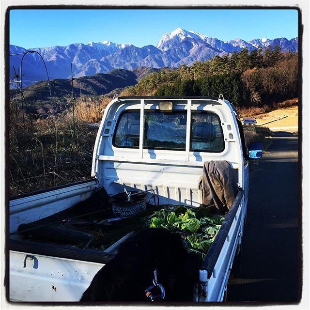 heart 今朝もいい天気^^ 人はクッキリ見える甲斐駒ケ岳に目が行くのですが abbeyは農家さんの軽トラ荷台のキャベツの葉っぱが気になります^^; #nagasakabase #mountainmountain #そんなあなたはスパイシー