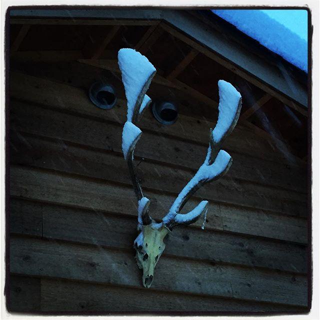 it's snowing hard.本日と明日は mountain*mountainお休みです^^; 定休日なんです^^ #nagasakabase #mountainmountain #そんなあなたはスパイシー #mountainlife #snowinghard