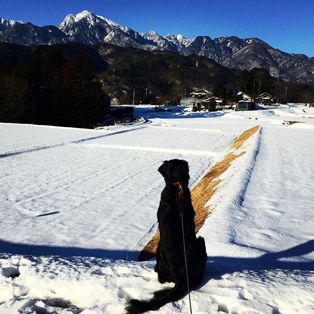 snowy worldまだまだいちめん雪^^; 太陽はでても気温は上がらずなかなかとけない^^; トイレの配管はヒーターが入っていたので大丈夫だったのですが 手洗いの蛇口がやられたっぽい^^; #nagasakabase #mountainmountain #そんなあなたはスパイシー #mountainlife