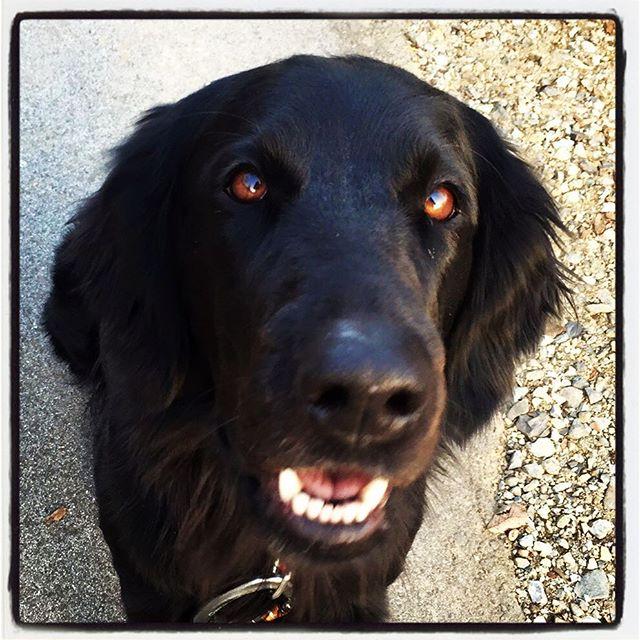abbey ポケットに手を突っ込むと お座りをしてじっと見上げるる^^; 何も入ってないからね^^; #nagasakabase #mountainmountain #そんなあなたはスパイシー #abbey #dog #mountainlife
