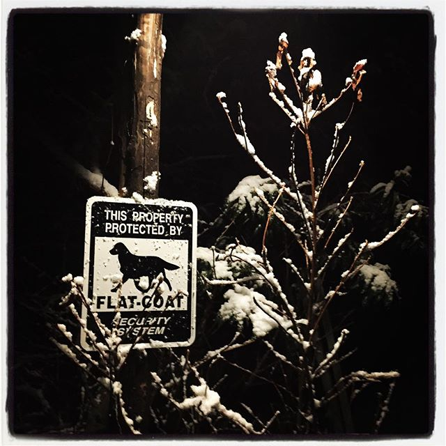 snowing 今シーズン最後の雪であってほしい^^; もうやんでいるので 残ることはないかな^^ #mountainmountain #nagasakabase #そんなあなたはスパイシー #mountainlife #snow