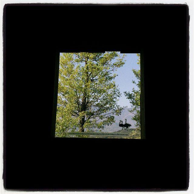 fenestella mountain*mountainのトイレからの風景^^冬にはまる裸だった木々が葉っぱに覆われ出して 南アルプスが少し隠れました^^; #mountainmountain #nagasakabase #そんなあなたはスパイシー #mountainlife #toilet