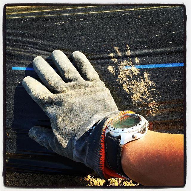foot stamp 今朝も植え付け作業の続きで畑へ^^ またマルチに怪しい足跡が付いていた^^; #nagasakabase #mountainmountain #そんなあなたはスパイシー #mountainlife  #footstamp #farmacy #パクチー#phakchi
