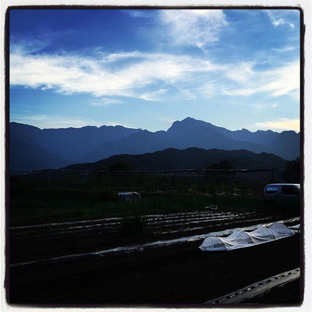 water the vegetables 新たにパクチーの種と ベビーリーフ、食べられる花・エディブルフラワーを三種に里芋を 種まき&植えつけ^^ #nagasakabase #mountainmountain #そんなあなたはスパイシー #mountainlife #phakchi #パクチー #cilantro