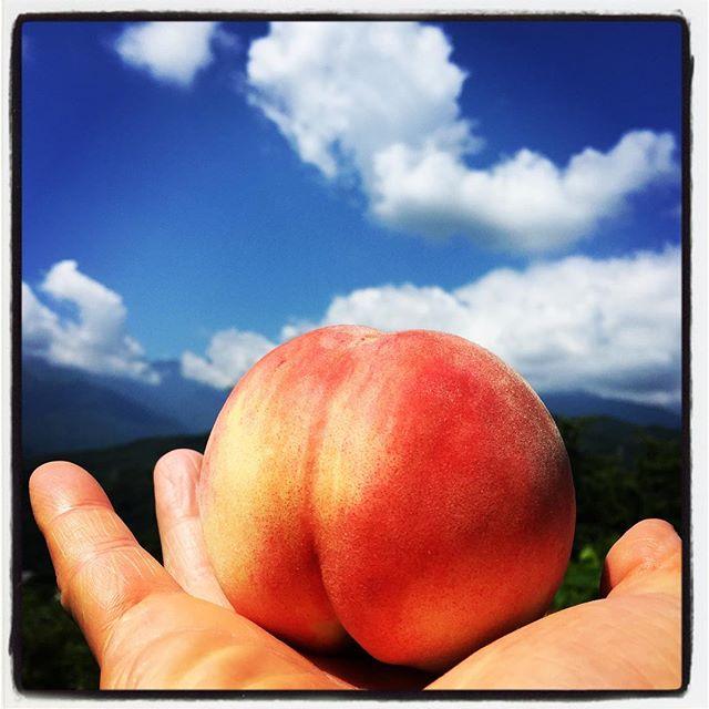 momo 白鳳がいい感じに最盛期^^ 今日 明日 mountain*mountainはお休みですが ご連絡いただければ 桃の販売いたします^^ ︎Facebook、インスタで!#mountainmountain #nagasakabase #そんなあなたはスパイシー#mountainlife #桃 #peach