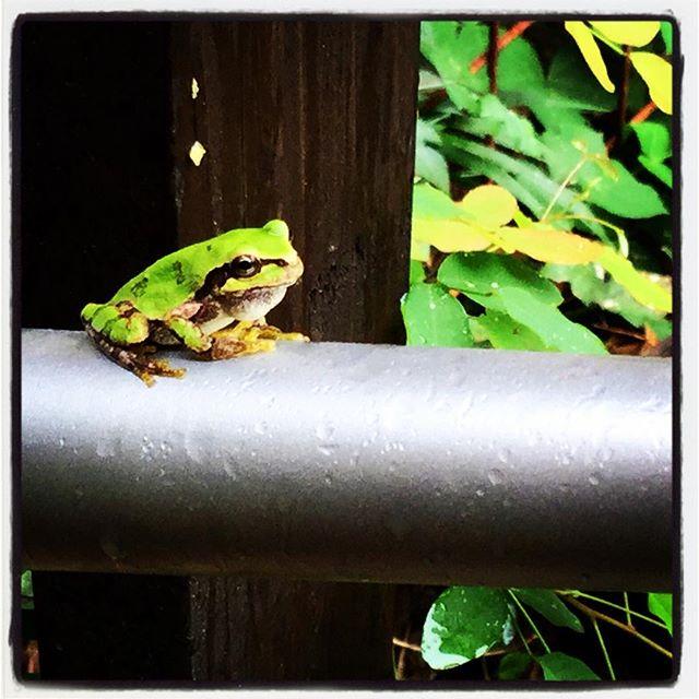 froggy 最近の定位置^^楽しいそうなのか 寂しそうなのか 腹が減っているのか 無心なのか・・いまいちわからない^^; #nagasakabase #mountainmountain #そんなあなたはスパイシー #mountainlife #froggy