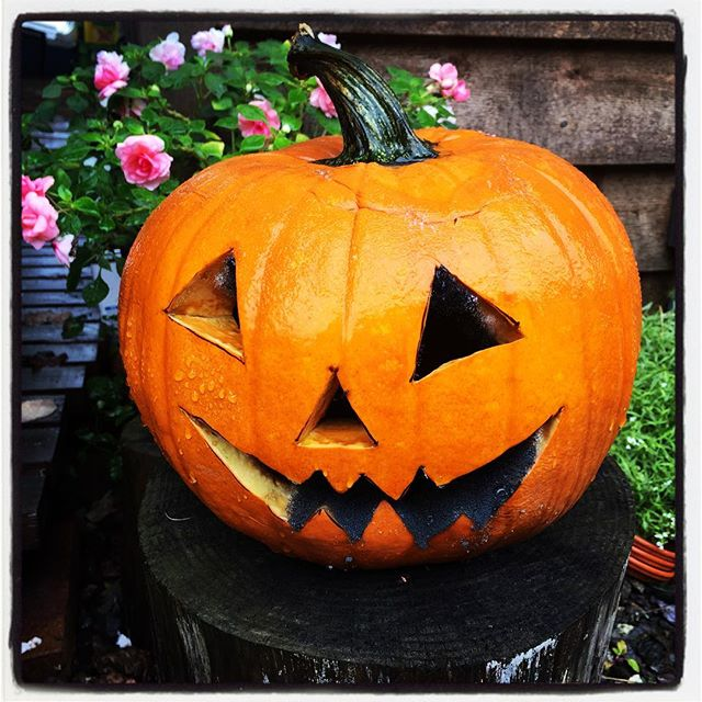 horror はやすぎたハロウィンカボチャは 口元にカビが発生し 日々オドロオドロしく変身^^; 悪臭を放つ日も近そうだ^^; #mountainmountain #nagasakabase #そんなあなたはスパイシー #mountainlife #halloween