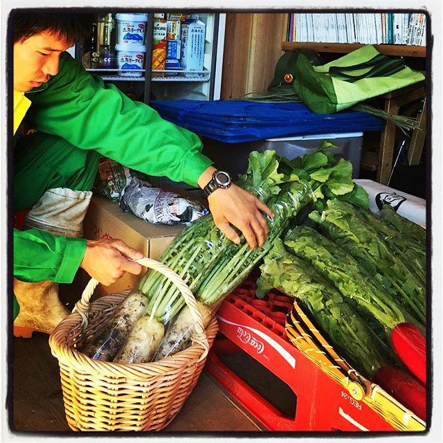 radish mountain*mountainの店内で販売中^^ サラダで食べられる赤い大根・レディサラダと 煮物やおでんに最適・大根(味なヤツ)^^ 白州・のっぽ農園の貴浩くんが丹精込めてつくってあます。農薬未使用なので安心^^葉っぱまで美味しく食べられます^^ 野菜だけ買いによっていただくのも歓迎ですので是非^^ #mountainmountain #nagasakabase #そんなあなたはスパイシー #mountainlife #radish #のっぽ農園