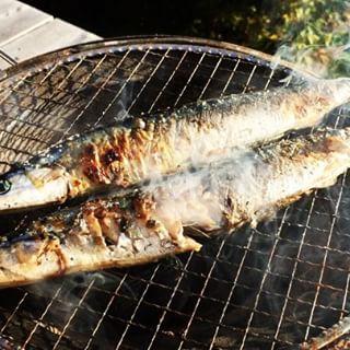 sanma本日のまかないは 秋刀魚^^ランチタイム終了と同時に炭をおこして 炭火焼に^^ いい感じで焼けて そして絶妙なタイミングでカフェのお客様ご来店^^ 七輪の端で 燠火に温められていた ちょっとしまった秋刀魚が 今日のランチでした^^; #mountainmountain #nagasakabase #そんなあなたはスパイシー #mountainlife #七輪 #秋刀魚 #さんま
