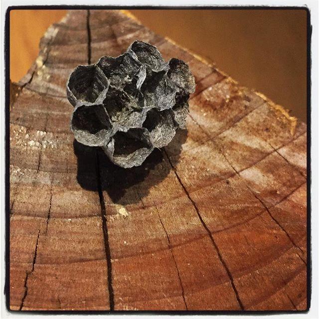firewood ストーブに薪を焚べようとしたら 蜂の巣がついていた^^;もう空き家だったけどね^^ #nagasakabase #mountainmountain #そんなあなたはスパイシー #mountainlife #firewood #薪ストーブ