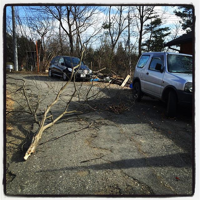 deadman 家の前の木が風で折れた^^;車にも電線にも当たらなかったのが幸い^^ もう一本折れそう^^;電柱にかかってるので 東電にお願いしました^^ かなり強い風が吹きまくって 強風警報がでてるっぽい^^ #nagasakabase #mountainmountain #そんなあなたはスパイシー #mountainlife #deadman #強風で木が折れた