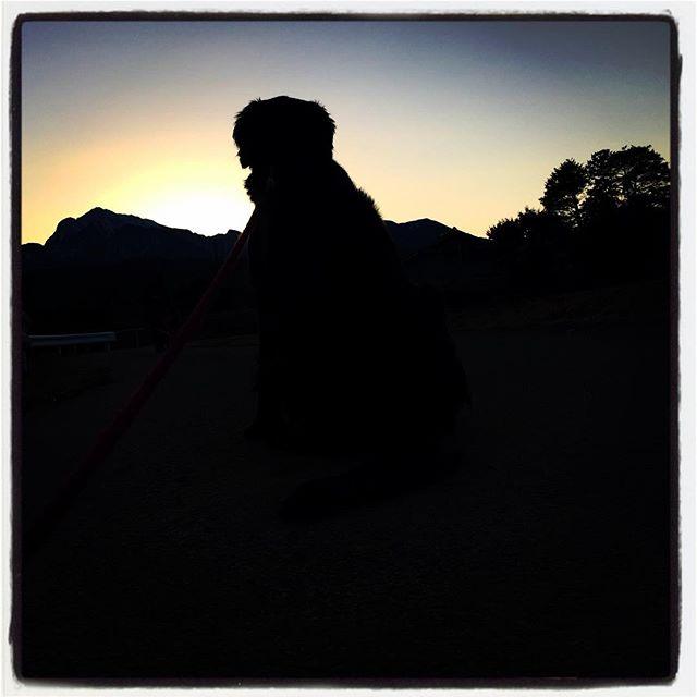 abbey 久しぶりにアビーと散歩^^ #nagasakabase #mountainmountain #そんなあなたはスパイシー #mountainlife #abbey #flatcoated