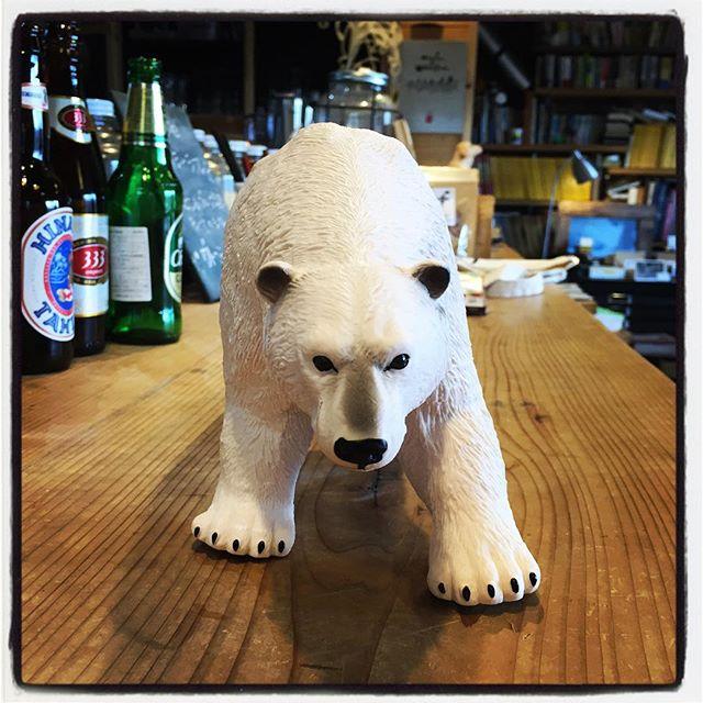 polar bear シロクマが仲間入り^^ #mountainmountain #nagasakabase #そんなあなたはスパイシー #polarbear