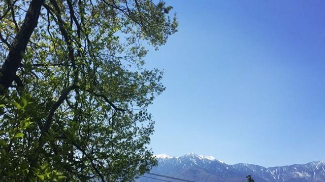 """jazzy 空はおあぞらで庭の木々には新芽がいっぱい^^鳥たちはにぎやか^^ """"とり""""と入力すると """"鶏肉""""が一番に出てくる^^; #nagasakabase #mountainmountain #そんなあなたはスパイシー #mountainlife #鳥がにぎやか"""