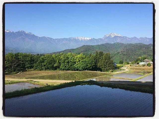 good morning 今朝はいい天気^^ 田圃の水も張られてよい景色^^ #nagasakabase #mountainmountain #そんなあなたはスパイシー #mountainlife