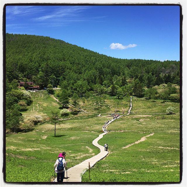 mt nyugasa思いつきで入笠山^^ 何度も登ったけれど ゴンドラはじめて乗った^^ 今年のスズランはまだまだでした^^; #nagasakabase #mountainmountain #そんなあなたはスパイシー #mountainlife #入笠山 #入笠山湿原 #スズランの花満開までもう少し