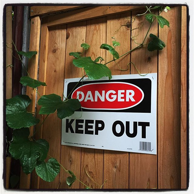 danger 物置の入り口に 蔦がはってきていい感じになってきたけれど 開けられない^^; #nagasakabase #mountainmountain #そんなあなたはスパイシー #mountainlife
