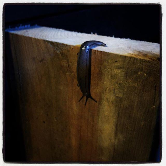 slug 午前中は 建築中のブルワリーを見学させてもらい 午後からは トマトを煮込みながら 母屋の玄関のアプローチにドアを設置^^ 夕方 犬達と戯れすぎて塗装まで手が回らず時間切れ^^;塗装はまた明日^^ 最初の訪問者は ナメクジでした^^; #nagasakabase #mountainmountain #そんなあなたはスパイシー #mountainlife #DIY #slug