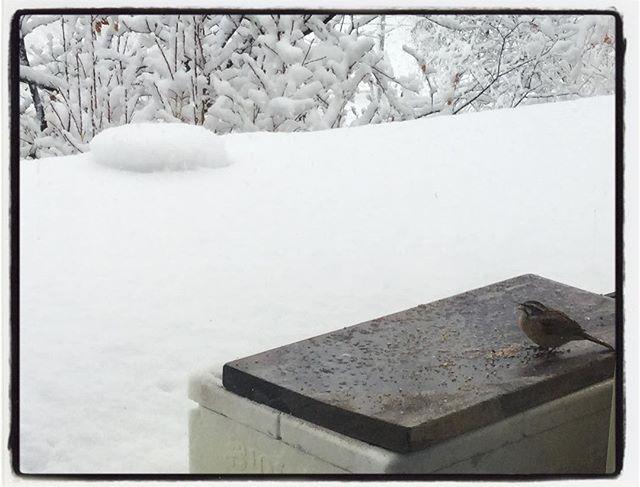 guest まさかの雪にまさかのほぼ満席足元悪いなか感謝です︎ 完全に気が抜けていたので ちょっとバタバタしました^^; 家のデッキにある鳥の餌台も雪に埋まってしまったので 軒下にエサを。かわるがわる こちらも千客万来︎ いつまで降るのか…#snowing#mountain #mountainmountain #nagasaka #nagasakabase #yatsugatakebase #yatsugatake #そんなあなたはスパイシー #山梨 #北杜 #移住 #定住 #旅人 #vagabond #料理人 #chef #photographer #cameraman #カメラマン #写真家 #japan #food #料理 #foodpic #foodstagram #foodie #restaurant #kitchen #stories