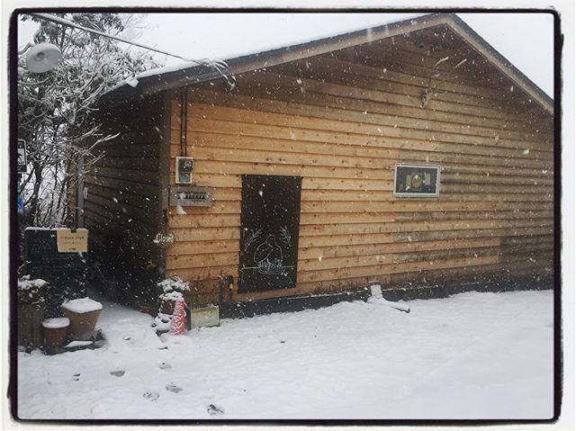 it's snowing 降ってます。mountain*mountainは通常営業しておりますので 気をつけてお出かけください︎ お店も お茶も暖かくしておきます︎ ご予約キャンセルされる方もご遠慮なく。安全第一ですので 次回また︎ #スタットレスなら#mountain #mountainmountain #nagasaka #nagasakabase #yatsugatakebase #yatsugatake #そんなあなたはスパイシー #山梨 #北杜 #移住 #定住 #旅人 #vagabond #料理人 #chef #photographer #cameraman #カメラマン #写真家 #japan #food #料理 #foodpic #foodstagram #foodie #restaurant #kitchen #stories